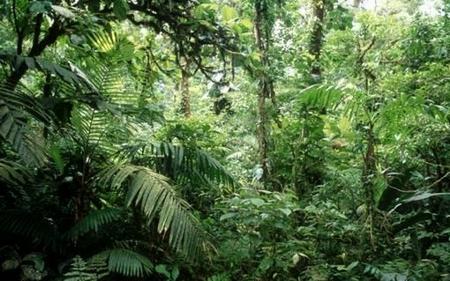 floresta-ecuatorial-02